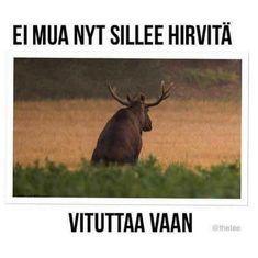 Sarcastic Humor, Sarcasm, Finnish Language, What Meme, Work Humor, Adult Humor, Animal Memes, Kittens Cutest, Funny Photos