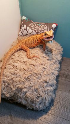 custom made bearded dragon hammocks pillow beds and wooden beds