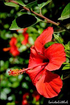 Plants, Hibiscus, Flower, Smile, Plant, Planets