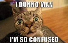 Confused . . . Please Explain! | Weddings, Etiquette and Advice ...