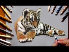 Speed drawing: Tiger Cub ♥ Colored Pencils | Jasmina Susak How to Draw a Realistic Tiger - YouTube