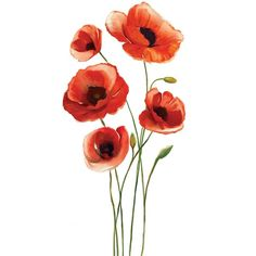 Red Poppies Wall Decal (€16) ❤ liked on Polyvore featuring home, home decor, wall art, backgrounds, poppy flower wall decals, red wall art, flower decals, blossom wall art and flower wall art
