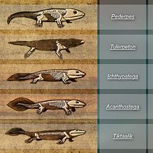 Great Transitions Interactive: The fossils of transitional creatures were key… Earth And Space Science, Life Science, Science And Nature, Science Fun, Biology Classroom, Teaching Biology, Ap Biology, Biology Teacher, Teaching Career