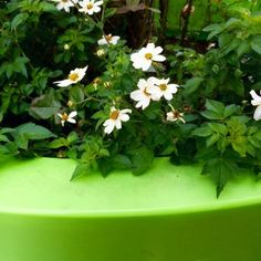 Your best garden pots ever - 6 tips for brilliant container gardening | The Middle-Sized Garden