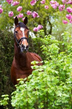 Hello flowers and gorgeous horse.
