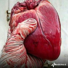 Hearts will never be practical until they are made unbreakable, and when they do, that is when we become immune to mortality. Medical Art, Medical School, School Motivation, Study Motivation, Arteries And Veins, Brain And Heart, Forensic Anthropology, Anatomical Heart, A Level Art