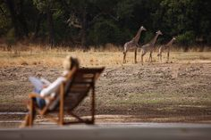 Zen in Zambia: the new luxury of Chinzombo African Tree, Villa Pool, African Furniture, Time And Tide, Out Of Africa, African Safari, Travel Style, Tourism, National Parks