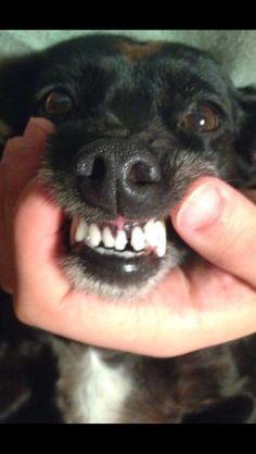 #dog #Tina