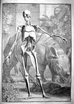 grabados antiguos de anatomia - Buscar con Google