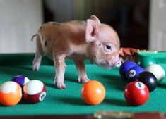 """""""I Have No Idea What I'm Doing"""" 
