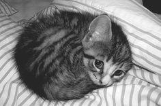 Estou aqui mais uma vez para falar da adoção de animais abandonados/de rua. Listei alguns motivos abaixo, para mostrar como é gostoso adotar um animal! Lealdade sem tamanho! É a segunda vez que ado...
