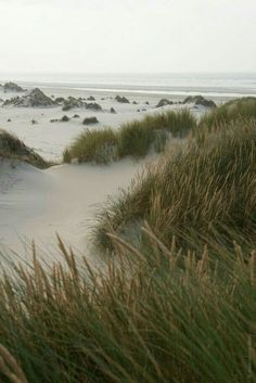 Off Season Terschelling To The Sea Green Beach Ocean Nature Aesthetic, Beach Aesthetic, Architecture Texture, Beautiful World, Beautiful Places, Landscape Photography, Nature Photography, Green Beach, The Great Outdoors
