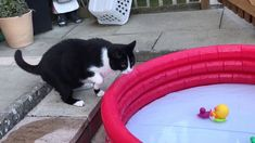 Snoopy the Glaswegian cat gets a new food bowl Food Bowl, Cat Gif, Squirrel, New Recipes, Snoopy, Pets, Videos, Animals, Animales