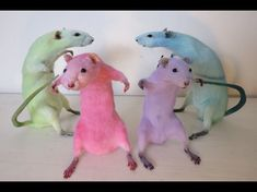 Funny Rats, Cute Rats, Funny Animal Jokes, Cute Funny Animals, Hamsters, Rodents, Cute Little Animals, Baby Animals, Animal Pictures