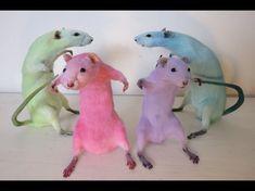 Funny Rats, Funny Animal Jokes, Cute Rats, Cute Funny Animals, Stupid Funny Memes, Haha Funny, Cute Animal Photos, Animal Pictures, Cute Little Animals