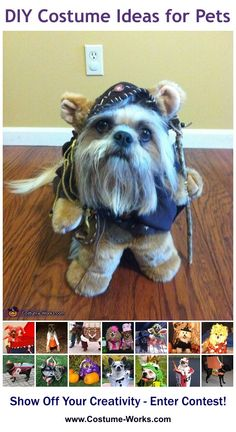 Ewok - tons of Halloween costume ideas for pets! Ewok Halloween, Great Halloween Costumes, Diy Dog Costumes, Halloween Costume Contest, Homemade Costumes, Creative Halloween Costumes, Costume Ideas, Halloween Shops, Animal Costumes