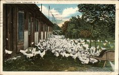 Chicken Farm Vineland, NJ