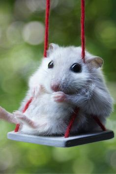 Why do people find mice ugly? Most of the time they're super cute like this guy. I just want to stick him in my pocket!! :)