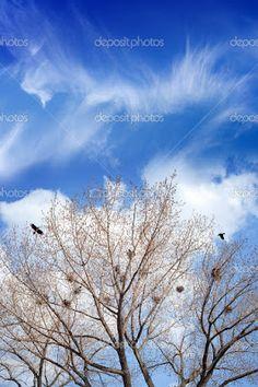 EQUILÍBRIO: As árvores, Tagore