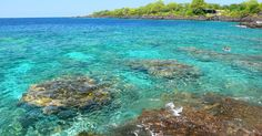 Hōnaunau Bay, aka Two Step. Great place to snorkel, especially around the sea mounts. Always see honu & eels, often dolphins. Once saw a black tip reef shark.