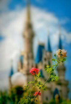Magic Kingdom, Walt Disney World