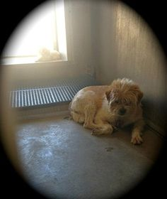 """A few short days ago, a three-year-old mixed breed dog was surrendered to the Los Angeles County Animal Care and Control in Lancaster, Calif. Her name is """"Ishta,"""" and she is heartbroken."""