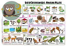 Describimos Animales P