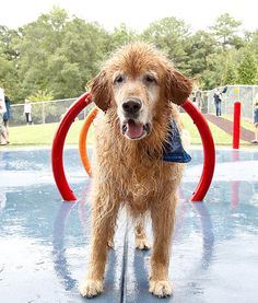 DOG DAYS OF SUMMER ~ Hundreds of dogs flock to the Beneful Dream Dog Park's unveiling in Alabaster, Ala. The newly renovated dog park's features are perfect to the summer's hot temperatures. There are custom-designed doggy splash pads and a doggy wash station.