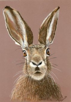 ARTFINDER: Wanda by Cate Wetherall - Whats on this hares mind! Think of a thousand things when you look at her each day! Animal Paintings, Paintings For Sale, Animal Drawings, Drawing Animals, Jack Rabbit, Rabbit Art, Rabbit Hole, Hare Illustration, Illustrations