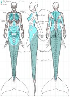ANATOMY Mermaid