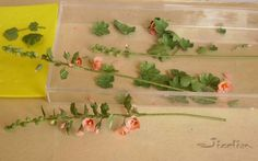 Closeup of making 1:12 hollyhocks. Contains link to Minipat with tutorials in French for many flowers and accessories