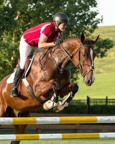 Polaris - Canadian Sport Horse - Jumper for sale on Bigeq.com