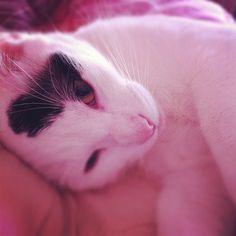"""""""Mi gato Simon medio dormido"""""""