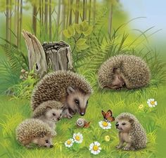 [Visit to Buy] HOMLIF Diy diamond painting cross stitch craft plastic canvas kits diamond paintings hedgehog Animals And Pets, Baby Animals, Cute Animals, Cross Paintings, Easy Paintings, 5d Diamond Painting, Mundo Animal, Drawing Skills, Woodland Creatures