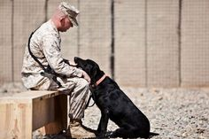 U.S. Marine Staff Sgt. Derick Clark, a kennel supervisor with 2nd Battalion, 9th Marine Regiment, comforts Yeager, a military working dog, as they wait for the beginning of a memorial service in honor of Lance Cpl. Abraham Tarwoe, Yeager's handler who was assigned to Weapons Company, 2nd Battalion, 9th Marines and was killed in action in Afghanistan. U.S. Marine Corps photo by Cpl. Alfred V. Lopez