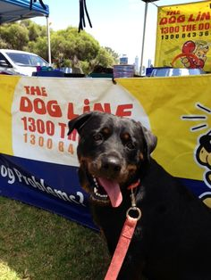 """#30 Entry: """"Ruby"""".. Owner: Kirsty http://www.thedogline.com.au/boogy-woofy/rubby"""