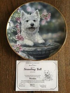 22ct Gold Trimmed West Highland White Terrier Collector Plate 'Standing Tall'  | eBay West Highland White, White Terrier, Stand Tall, Westies, Terriers, The Collector, Plates, Gold, Animals
