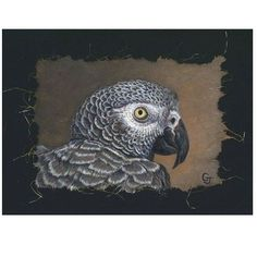 A portrait of the artist's own parrot Jako, the African Gray Portrait Print by Gary Johnson is a tribute to his unique companion's graceful beauty.