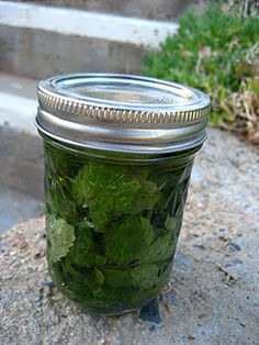 Homemade peppermint extract.- We should make that this summer! 15-15 pints and they can be gifts for Christmas