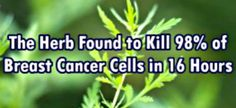 ANOTHER GIFT FROM MOTHER NATURE! http://www.secretsofthefed.com/little-known-chinese-herb-iron-kill-98-cancer-cells-16-hours/