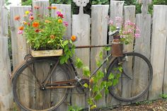 Old bikes make such great flower planters in bike themed gardens!