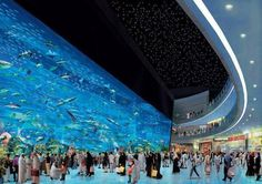 Dubai mall and the aquarium in the middle of it!