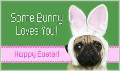 Some bunny loves you Happy Easter easter easter quotes easter images easter quote happy easter happy easter. easter pictures funny easter quotes happy easter quotes quotes for easter
