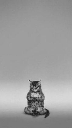 Zen #cat.
