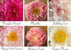 Peonies-wedding-flowers-romantic-for-bridal-bouquet-light-pink-white.original