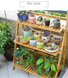 Flower Pot Plant Stand 3 Tier Flower Planter Rack Shelf Shelves Organizer With Gloves and Tools Flower Planters, Diy Planters, Flower Pots, Cactus Flower, Balcony Plants, Outdoor Plants, Balcony Gardening, Apartment Balcony Garden, Balcony Herb Gardens