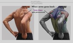 Human Figure Drawing Reference Reference by anatomy sculptors More - Anatomy Next is simulation software for medical education and healthcare. Anatomy Back, Muscle Anatomy, Body Anatomy, Anatomy Study, Anatomy Drawing, Human Anatomy, Elbow Anatomy, Forearm Anatomy, Shoulder Anatomy