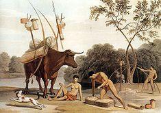 Joisan, pastores khoikhoi, s. XIX