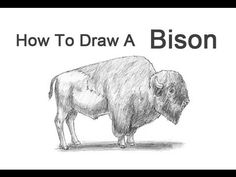 How to Draw a Bison (Buffalo) Disney Drawing Tutorial, Drawing Tutorials, Art Tutorials, Drawing Tips, Drawing Ideas, Buffalo Animal, Buffalo Art, Bison Tattoo, Buffalo Painting