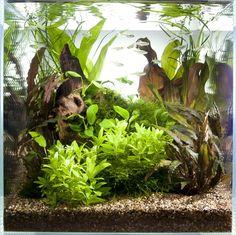 Layout 43 - Tony Swinney - Tropica Aquarium Plants